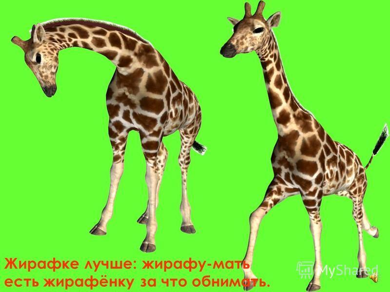 Жираф-длинно шейка – ему никак для шеи не выбрать воротника.