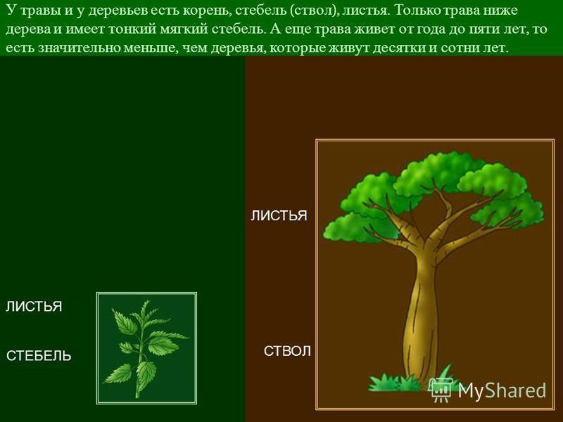 Но больше всего на лугу конечно же, травы. Если присмотреться, то можно заметить сходство травы и деревьев.