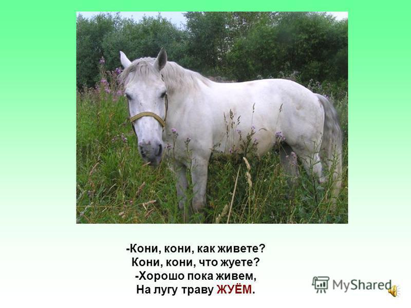 Как живете? Владимир Степанов