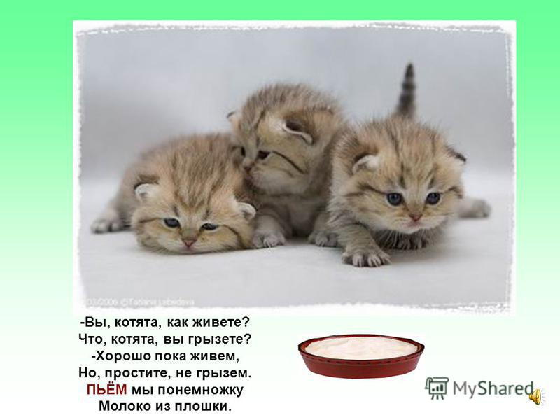 -Как вы, кролики, живете? Что вы, кролики, дерете? -Хорошо, пока живем, Но, простите, не дерем. А ГРЫЗЁМ мы ловко Свежую морковку