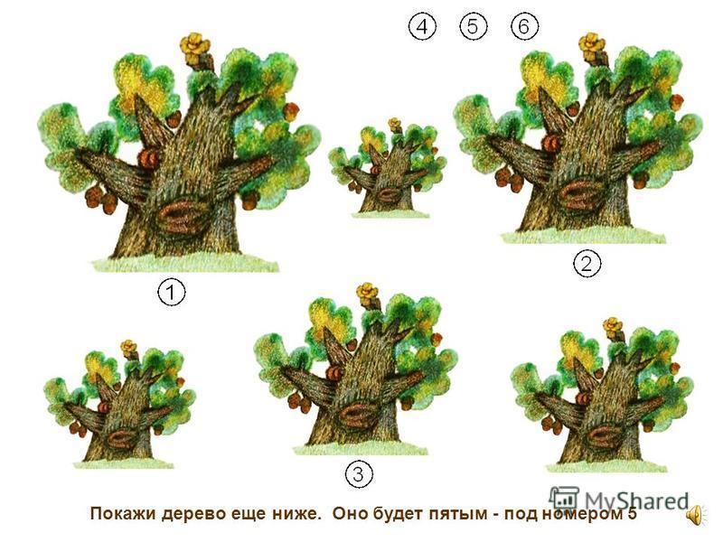 Найди дерево ещё пониже. Оно будет четвертым - под номером 4