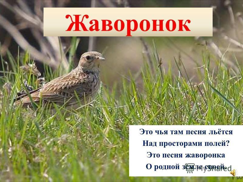 Сова Спят деревья, спит трава, Но не спит всю ночь сова. Учит мама малышей По ночам ловить мышей.