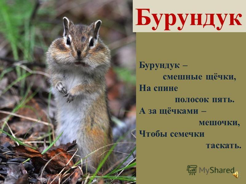 Рысь Если есть у кисочки На ушах две кисточки, Эту киску берегись, Потому что это – Р-рысь!