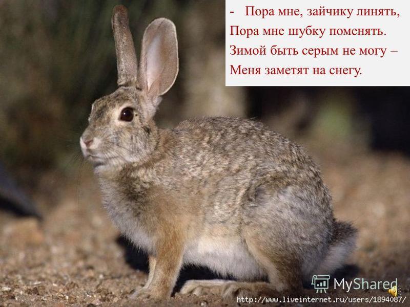 Вот и белка и зайчишка колючий ёжик бурый мишка Сейчас мы их сказать попросим, Как все они встречают осень