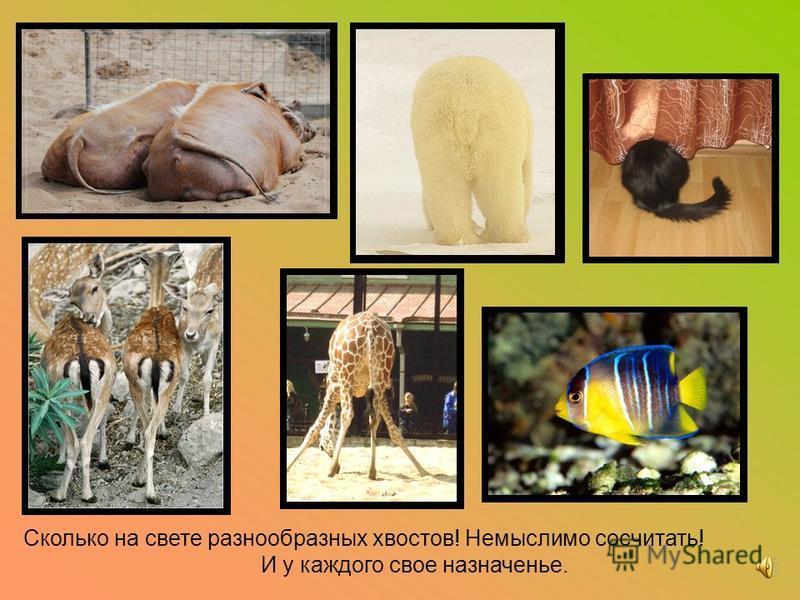 Для чего животным нужны хвосты?