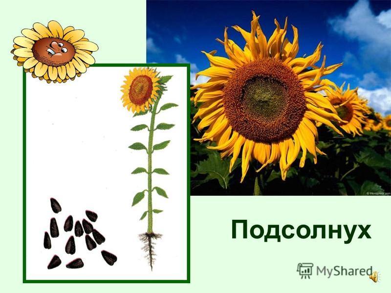 Посмотри, какие разные бывают семена.