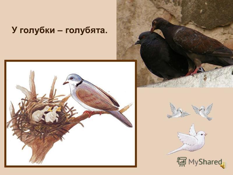 У утки - утята