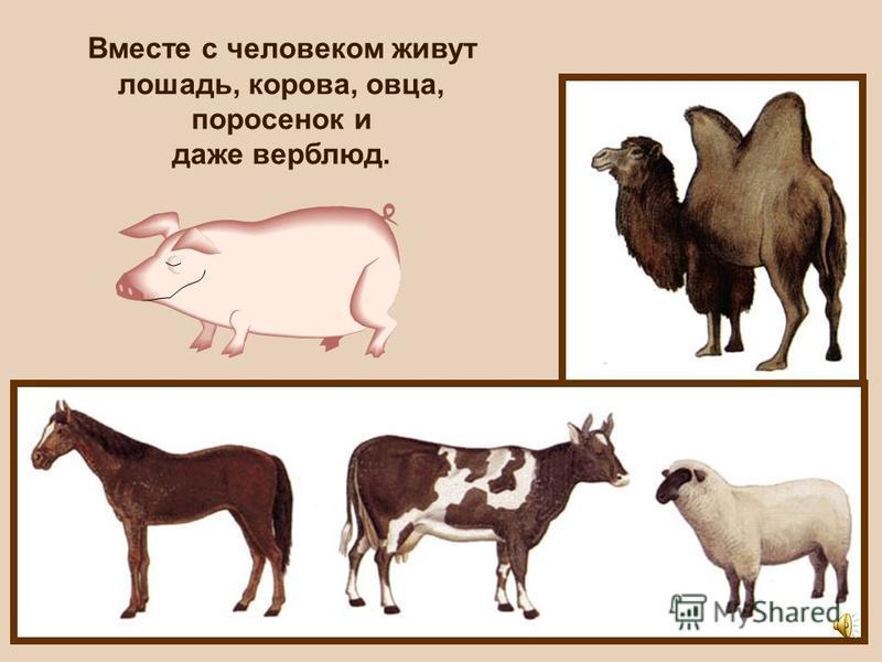 Вспомни, каких домашних животных ты знаешь?