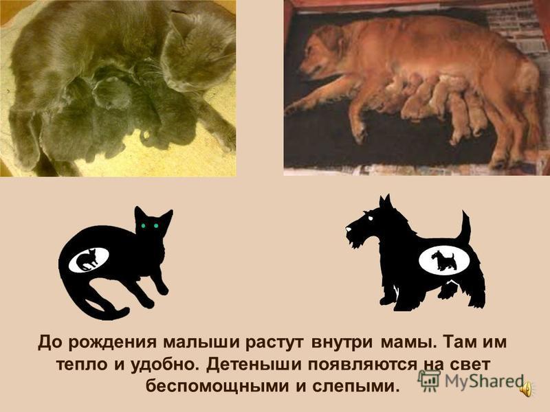 Кошка и собака – тоже домашние животные. Знаешь ли ты, как появляются на свет котята и щенки?