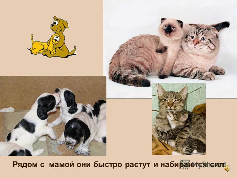 Мама-кошка и мама-собака кормят своих малышей молочком. Котята и щенки сосут молоко и спят.