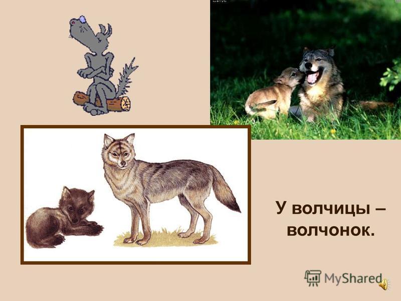 И у диких животных малыши рождаются у мамы – маленькие и похожие на свою маму.