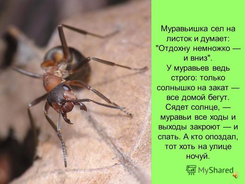 Долез до вершины, посмотрел вниз, а там, на земле, его родной муравейник чуть виден.