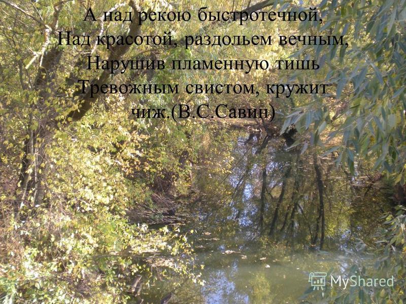 А над рекою быстротечной, Над красотой, раздольем вечным, Нарушив пламенную тишь Тревожным свистом, кружит чиж.(В.С.Савин)