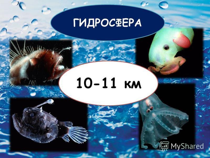10-11 км ГИДРОСФЕРА