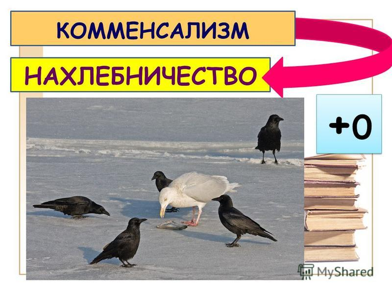 НАХЛЕБНИЧЕСТВО КОММЕНСАЛИЗМ +0+0 +0+0