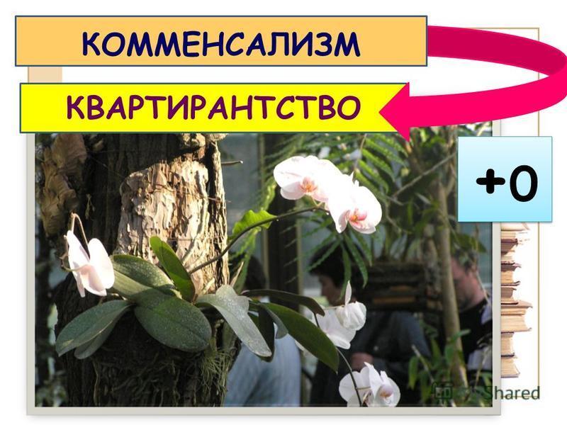 +0+0 +0+0 КВАРТИРАНТСТВО КОММЕНСАЛИЗМ