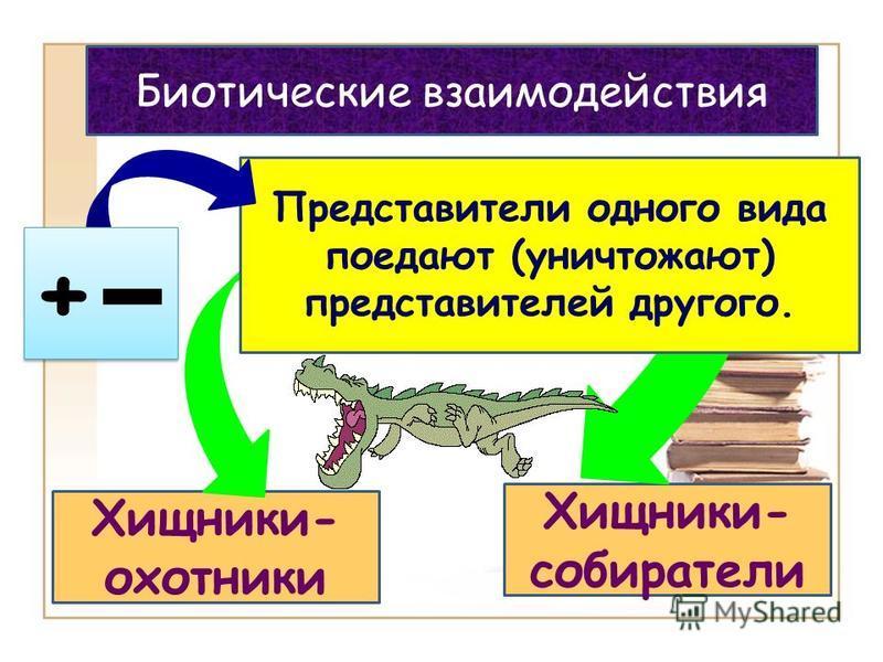 Хищники- собиратели Хищники- охотники Представители одного вида поедают (уничтожают) представителей другого. Биотические взаимодействия + +