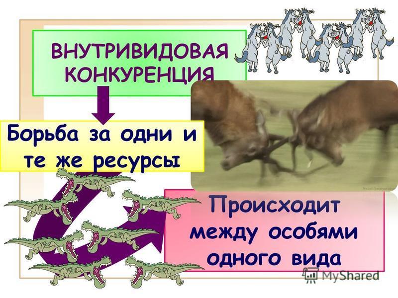 Происходит между особями одного вида ВНУТРИВИДОВАЯ КОНКУРЕНЦИЯ Борьба за одни и те же ресурсы