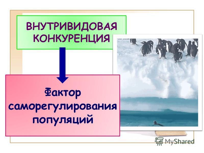 ВНУТРИВИДОВАЯ КОНКУРЕНЦИЯ Фактор саморегулирования популяций