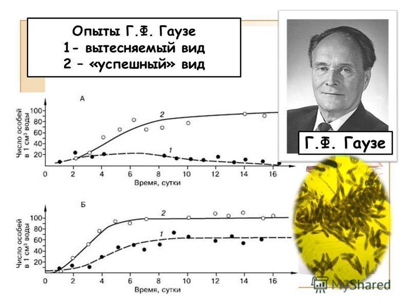 Г.Ф. Гаузе Опыты Г.Ф. Гаузе 1- вытесняемый вид 2 – «успешный» вид