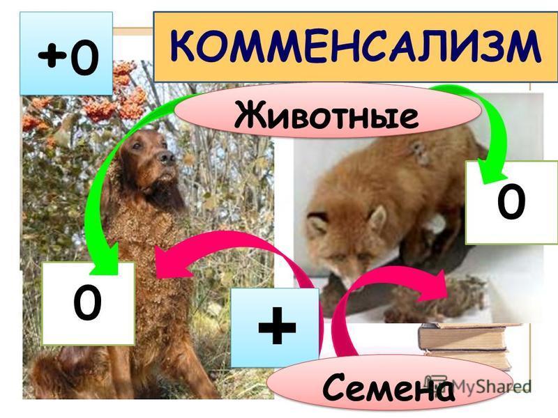 +0+0 +0+0 0 0 Животные Семена