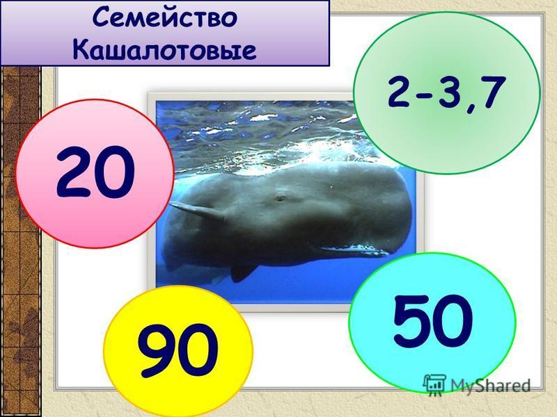 Семейство Кашалотовые 20 2-3,7 90 50