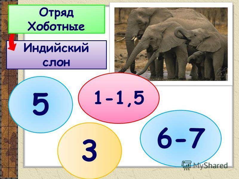 Индийский слон Отряд Хоботные 3 5 1-1,5 6-7