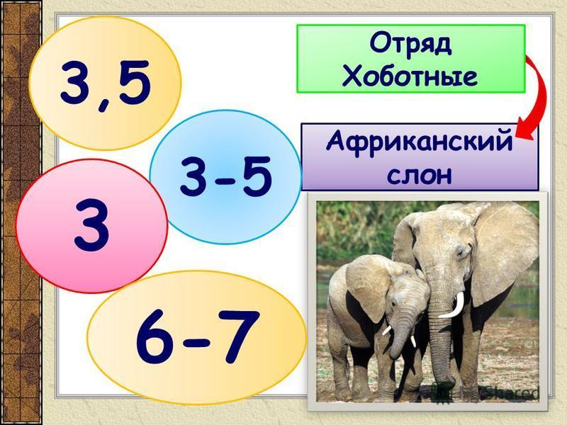 Африканский слон Отряд Хоботные 3,5 3-5 3 6-7