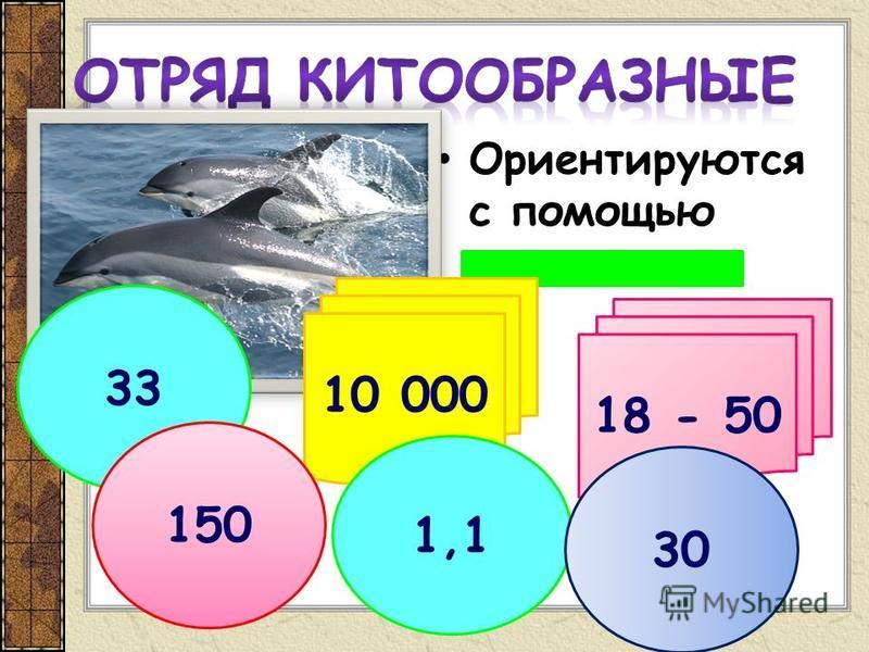 Ориентируются с помощью эхолокации 18 - 50 10 000 33 150 1,1 30