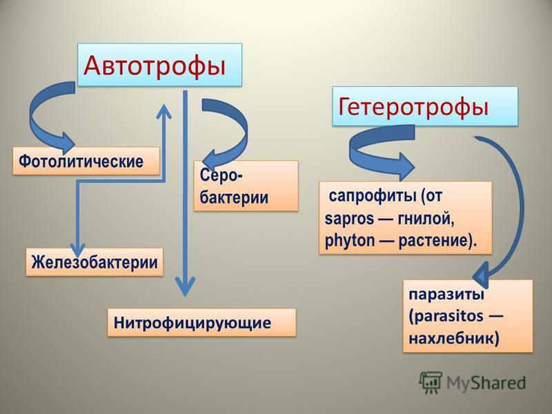 Автотрофы Фотолитические Серо- бактерии Железобактерии Нитрофицирующие Гетеротрофы сапрофиты (от sapros гнилой, phyton растение). паразиты (parasitos нахлебник)