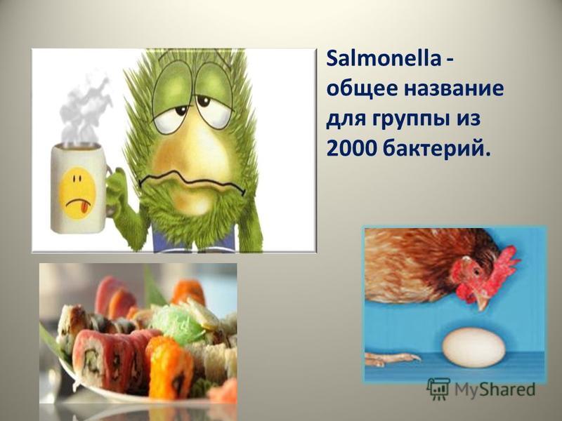 Salmonella - общее название для группы из 2000 бактерий.