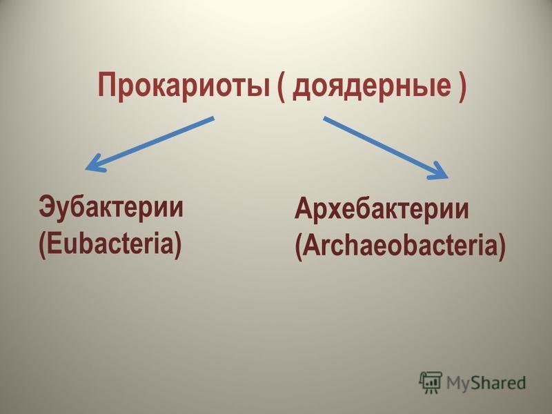 Прокариоты ( доядерные ) Эубактерии (Eubacteria) Архебактерии (Archaeobacteria)