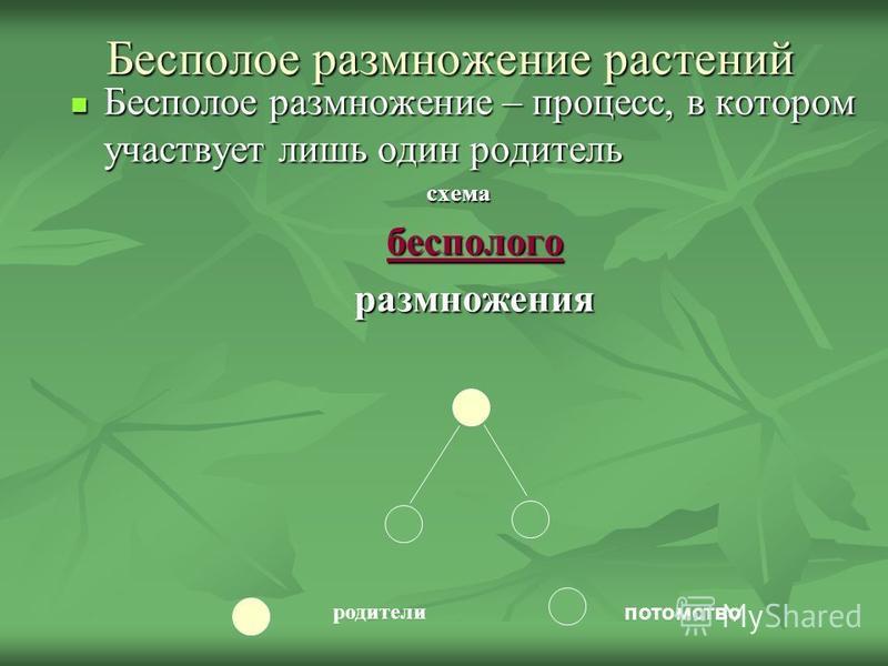 Бесполое размножение растенийй Бесполое размножение – процесс, в котором участвует лишь один родитель Бесполое размножение – процесс, в котором участвует лишь один родитель схема схема бесполого размножения потомство родители