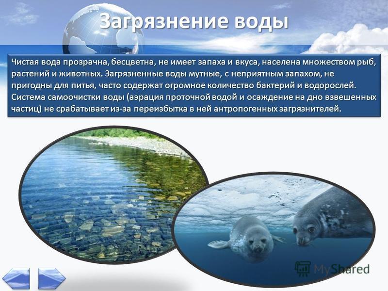 Чистая вода прозрачна, бесцветна, не имеет запаха и вкуса, населена множеством рыб, растений и животных. Загрязненные воды мутные, с неприятным запахом, не пригодны для питья, часто содержат огромное количество бактерий и водорослей. Система самоочис