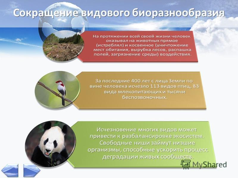 Сокращение видового биоразнообразия