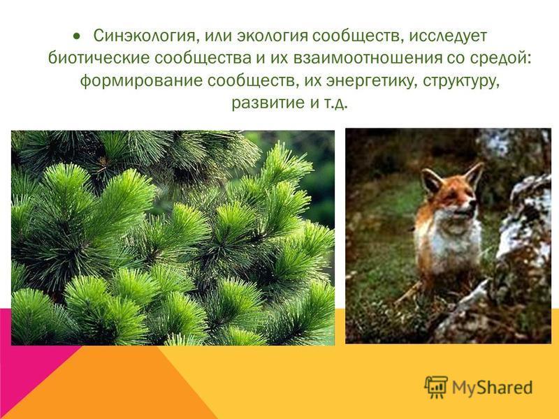 Синэкология, или экология сообществ, исследует биотические сообщества и их взаимоотношения со средой: формирование сообществ, их энергетику, структуру, развитие и т.д.