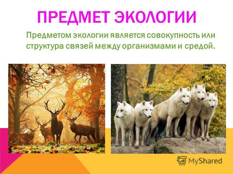 ПРЕДМЕТ ЭКОЛОГИИ Предметом экологии является совокупность или структура связей между организмами и средой.