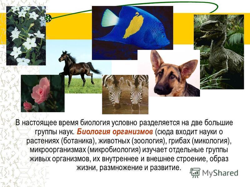 В настоящее время биология условно разделяется на две большие группы наук. Биология организмов (сюда входит науки о растениях (ботаника), животных (зоология), грибах (микология), микроорганизмах (микробиология) изучает отдельные группы живых организм