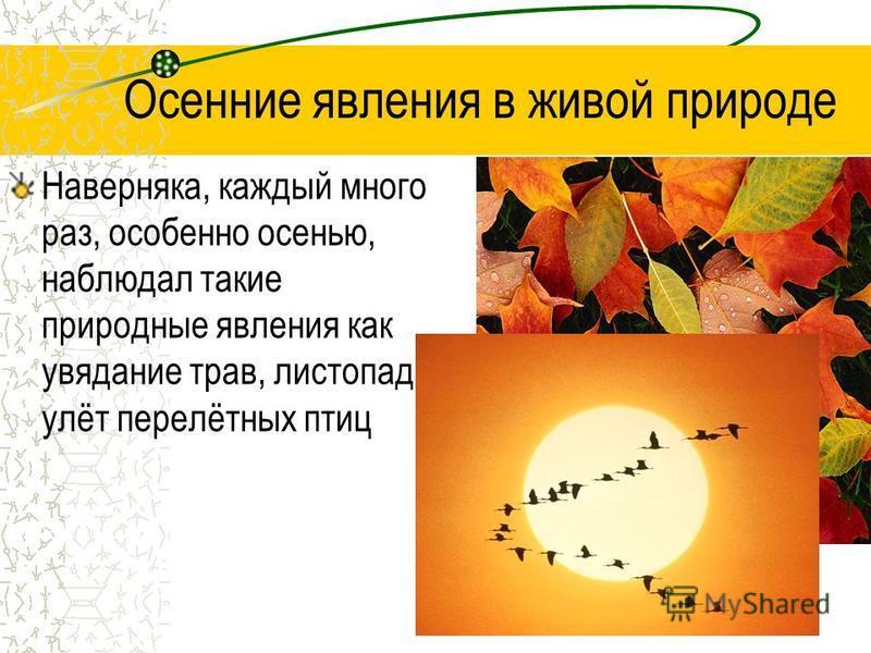 Осенние явления в живой природе Наверняка, каждый много раз, особенно осенью, наблюдал такие природные явления как увядание трав, листопад, улёт перелётных птиц
