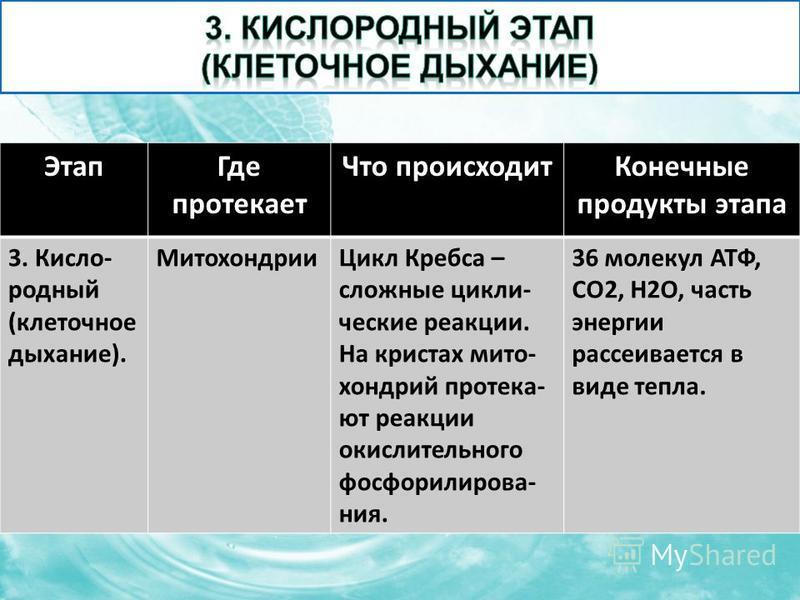 Этап Где протекает Что происходит Конечные продукты этапа 3. Кисло- родный (клеточное дыхание). Митохондрии Цикл Кребса – сложные циклические реакции. На кристах митохондрий протека- ют реакции окислительного фосфорилирования. 36 молекул АТФ, CO2, H2