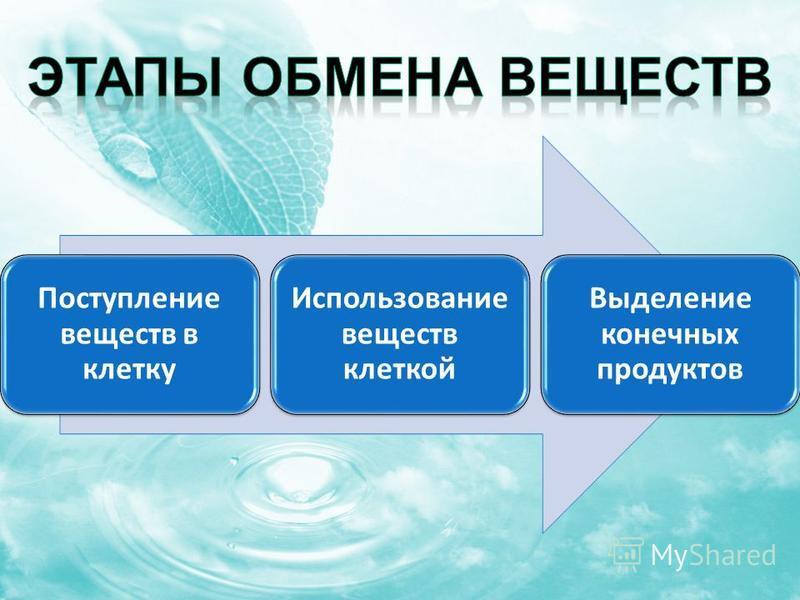 Поступление веществ в клетку Использование веществ клеткой Выделение конечных продуктов