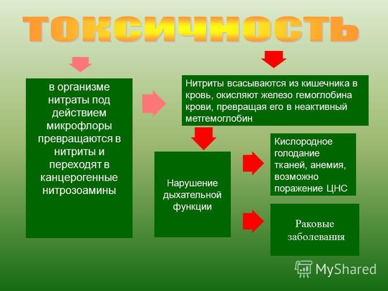 в организме нитраты под действием микрофлоры превращаются в нитриты и переходят в канцерогенные нитрозамины Нитриты всасываются из кишечника в кровь, окисляют железо гемоглобина крови, превращая его в неактивный метгемоглобин Нарушение дыхательной фу