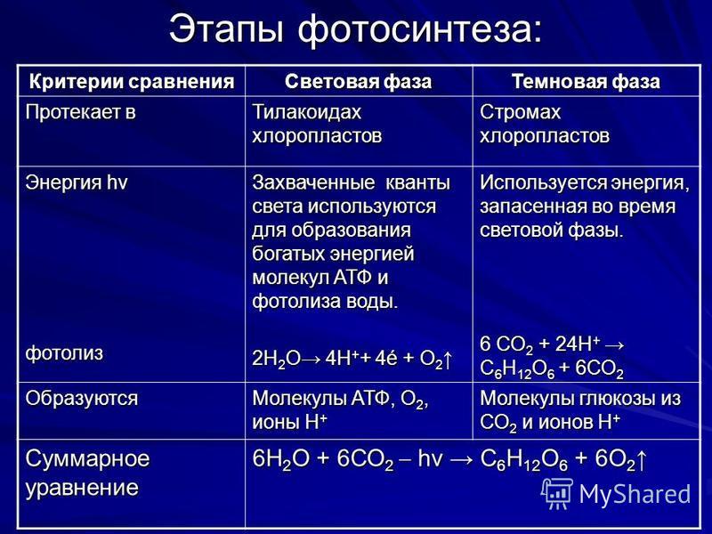 Этапы фотосинтеза: Критерии сравнения Световая фаза Темновая фаза Протекает в Тилакоидах хлоропластов Стромах хлоропластов Энергия hv фотолиз Захваченные кванты света используются для образования богатых энергией молекул АТФ и фотолиза воды. 2Н 2 О 4