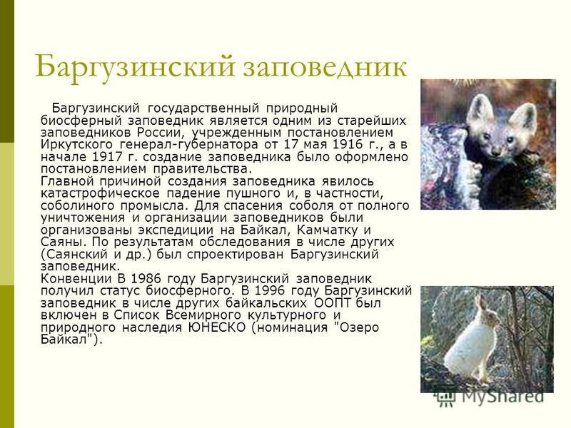 Баргузинский заповедник Баргузинский государственный природный биосферный заповедник является одним из старейших заповедников России, учрежденным постановлением Иркутского генерал-губернатора от 17 мая 1916 г., а в начале 1917 г. создание заповедника