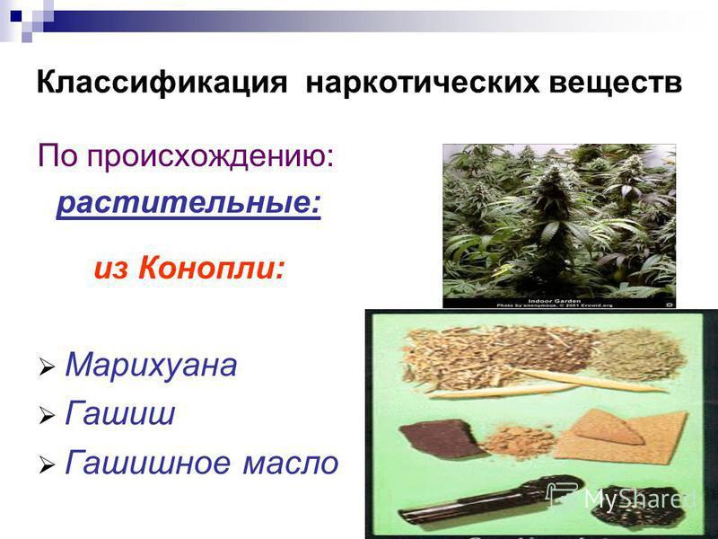 Классификация наркотических веществ По происхождению: растительные: из Конопли: Марихуана Гашиш Гашишное масло