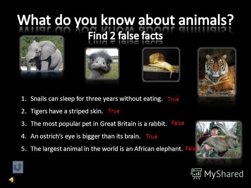 1.Snails can sleep for three years without eating. 2.Tigers have a striped skin. 3.The most popular pet in Great Britain is a rabbit. 4.An ostrichs eye is bigger than its brain. 5.The largest animal in the world is an African elephant. True False Tru