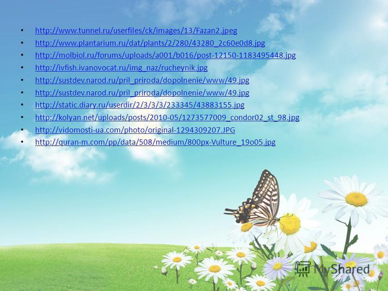 http://www.tunnel.ru/userfiles/ck/images/13/Fazan2. jpeg http://www.plantarium.ru/dat/plants/2/280/43280_2c60e0d8. jpg http://molbiol.ru/forums/uploads/a001/b016/post-12150-1183495448. jpg http://ivfish.ivanovocat.ru/img_naz/rucheynik.jpg http://sust