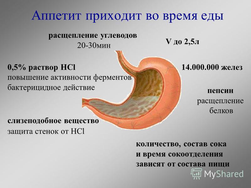Аппетит приходит во время еды V до 2,5 л 14.000.000 желез расщепление углеводов 20-30 мин 0,5% раствор HCl повышение активности ферментов бактерицидное действие пепсин расщепление белков слизеподобное вещество защита стенок от HCl количество, состав