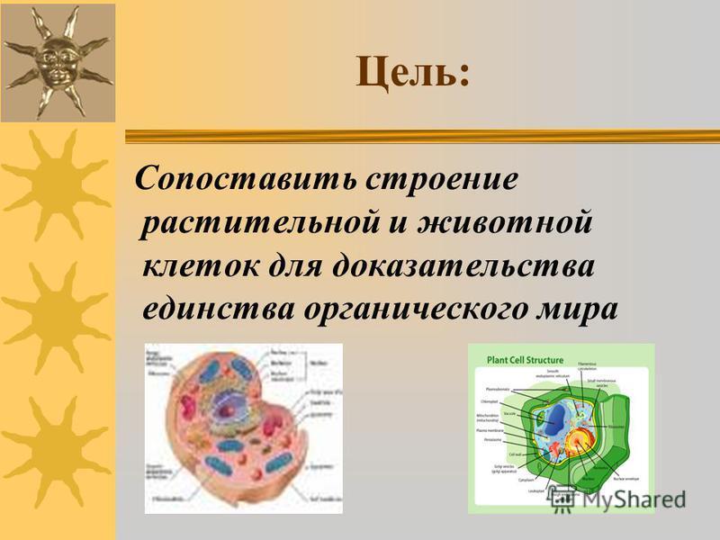 Цель: Сопоставить строение растительной и животной клеток для доказательства единства органического мира