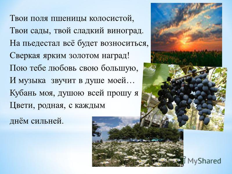 Твои поля пшеницы колосистой, Твои сады, твой сладкий виноград. На пьедестал всё будет возноситься, Сверкая ярким золотом наград! Пою тебе любовь свою большую, И музыка звучит в душе моей… Кубань моя, душою всей прошу я Цвети, родная, с каждым днём с